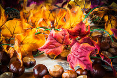 Autum background Royalty Free Stock Photography