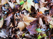 Autum Background Royalty Free Stock Image