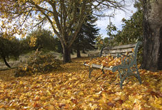 Autum Bench Royalty Free Stock Photography