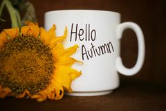 Free Autum Coffee Concept With Yellow Sunflower Closeup. White Mug Of Coffee With Text - Hello Autumn Stock Image - 162036211