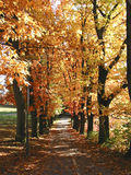 Autum Colors. Autumn on a road in Erlangen, Germany Royalty Free Stock Photography