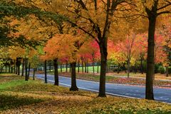 Autumn Colors adorn the trees along a street. Beautiful autumn colors adorn the trees that line a paved road stock photo