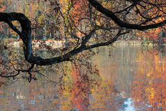Autum colors on the lake Stock Images