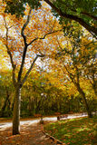 Autum Colors in the Park Stock Photography