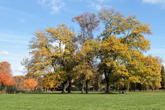 Autum colors at the park Royalty Free Stock Photo