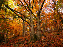 Autum day in the forrest Stock Photography
