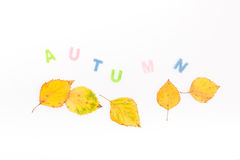 Autum design. Autumn leaves decoration with letters Stock Image