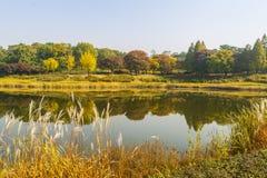 Autum drzewa i kolorowy krajobraz w Seul, Południowy Korea obrazy royalty free