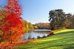 Autum drzewo obraz royalty free