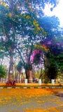 Autum floweres på träd Arkivbilder