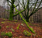 Autum forest Royalty Free Stock Photography