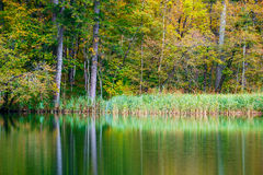 Autum forest lake Kozjak in Plitvice Royalty Free Stock Images