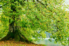 Autum forest lake Kozjak in Plitvice National Park Stock Photo