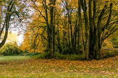 Autum in full swing. Autumn leaves covering tree branches and grass lawn at a park Royalty Free Stock Photography