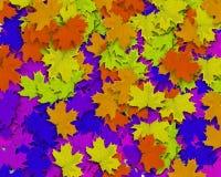 autum kolor tła wielo- Fotografia Stock