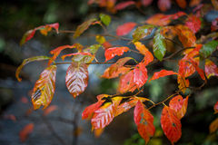 Autum kolory Fotografia Stock