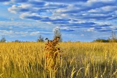 Autum landscape Осенний пейзаж Stock Image