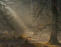 autum lasu światło Zdjęcie Royalty Free