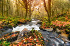 Autum lasu rzeka zdjęcie royalty free