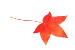 Autum leaf Royalty Free Stock Images