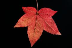 Autum Leaf Royalty Free Stock Photo