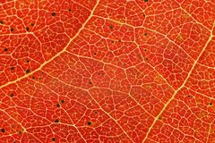 Autum leaf closeup Stock Images