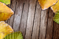 Autum Leaf On Wooden Background Royalty Free Stock Image