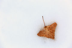 Autum leaf on snow surface Royalty Free Stock Photography