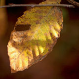 Autum leaf Royalty Free Stock Photography