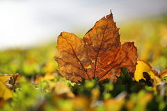 Autum Royalty Free Stock Image