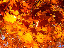 Autum leaves Stock Photo