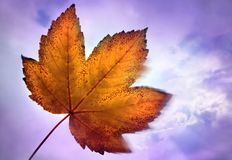 Autum leaves Stock Image