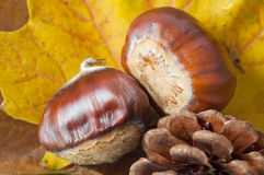 Autum Leaves with Conkers and Fir Cone Royalty Free Stock Photo