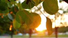 Autum leaves nature tree stock footage