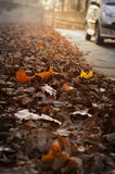 Autum leaves on the sidewalk. Masses of autumn leaves on a sidewalk in Paris, France. Car driving by stock images