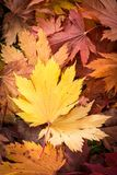 Autum Leaves Wallpaper Stock Images