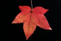 autum liści, Zdjęcie Royalty Free