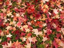 Autum nedgångsidor på gräs, gräsmatta Rött guling Arkivbilder