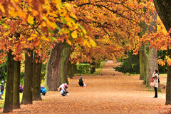Autum park,Moscow, Russia Stock Photos