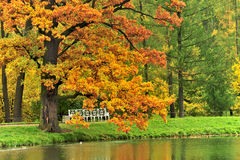 Autum park,Moscow, Russia Stock Images