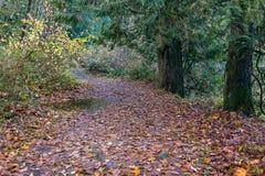 Autum path through forest. Fallen red leaf path through autumn woods Royalty Free Stock Photos