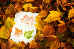 Autum Prints Amongst Leaves Stock Images