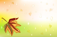 Autum rain and golden leaf Royalty Free Stock Photos