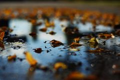 Autum reflexion brown. Autum reflexion water Royalty Free Stock Photos