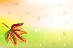 Autum Regen und goldenes Blatt Lizenzfreie Stockfotos