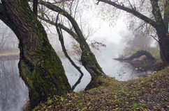 Autum river landscape with  tree and morming mist Stock Photography