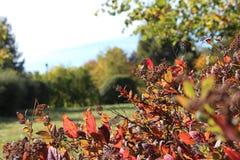 Autum säsong, natur, miljö, gräsplan som är röd, dag, soligt som är lat, ferie som är utomhus-, lopp, fritid, liv Royaltyfri Bild
