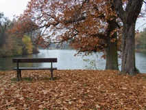 Autum scenery. Lonely bench facing the pond, before which stand two trees. Autumn scenery park in Swierklancu in Poland Royalty Free Stock Photos