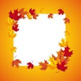 Autum season Royalty Free Stock Image
