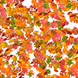 Autum Season fall leaf composition. Composition of fall leaves, colorful autumn leaf on white isolated background Stock Photo